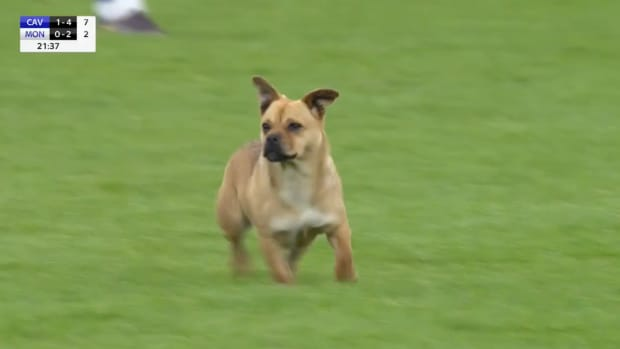 monday-hot-clicks-gaa-gaelic-football-cavan-monaghan-dog-pitch-video.png