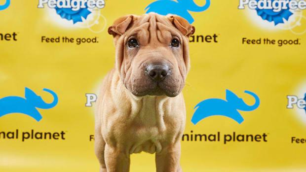 puppy-bowl-tv-channel-info.jpg