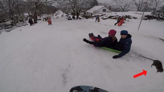 thursday-hot-clicks-victoria-bc-rat-sled-collision-video.jpg