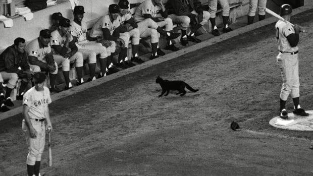 cubs-black-cat-lead.jpg