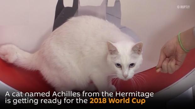 world-cup-predictions-deaf-cat-achilles.jpg