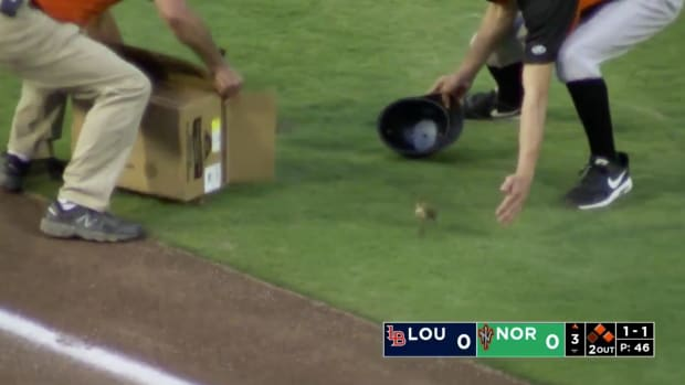 monday-hot-clicks-norfolk-tides-baby-ducks-field-video.png