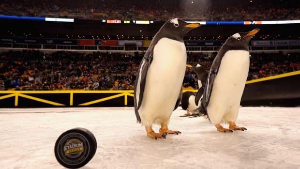 peta-penguins.jpg