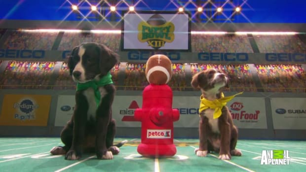 Puppy Bowl XIII kicks off - IMAGE
