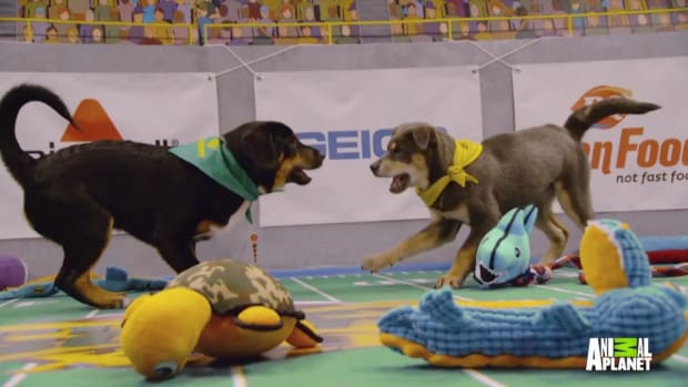 Puppy Bowl tug-of-war - IMAGE