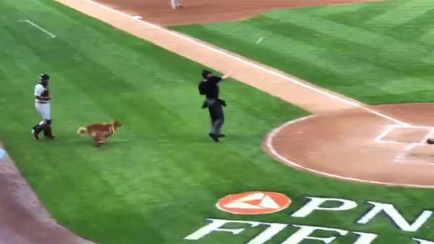 bat-dog-umpire-fetch.jpg