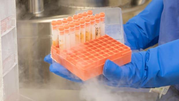 andrews-institute-stem-cells-up-close.jpg