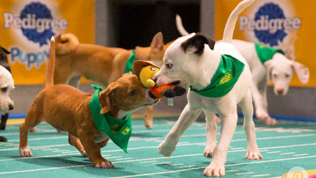 puppy-bowl-where-are-now1.jpg