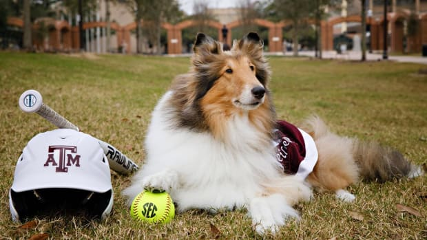 Adorable dog mascots in honor of National Puppy Day - IMAGE