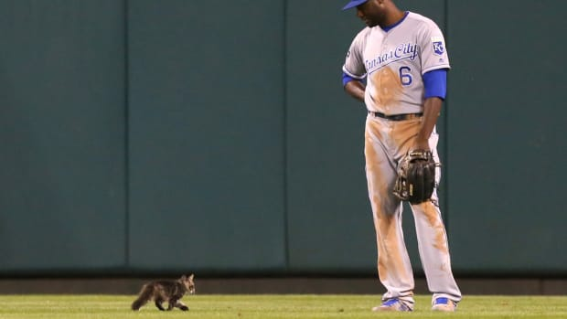 cardinals-rally-cat-gone-missing.jpg