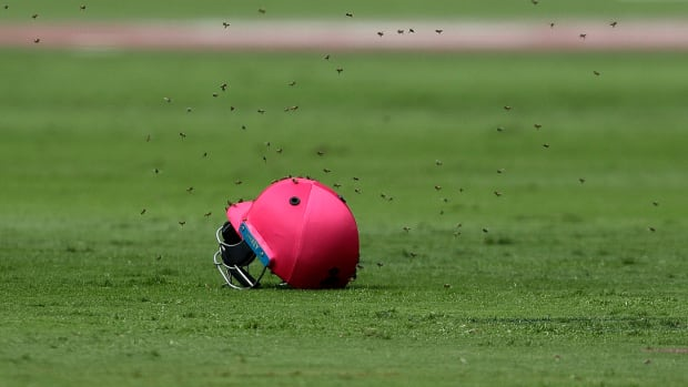 bees-warm-cricket-match.jpg