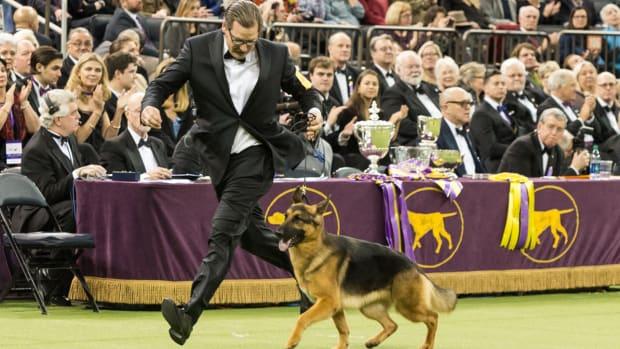 rumour-westminster-dog-show.jpg