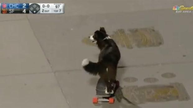 skateboarding-dog.jpg