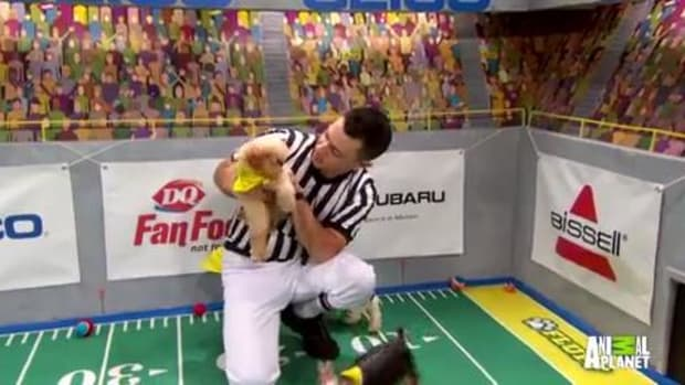 Puppy Bowl goal - IMAGE