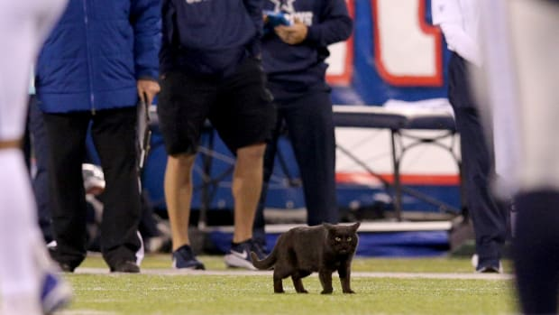 A black cat on the field at Giants-Cowboys game