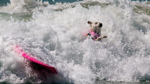 2016-0925-Surf-Dog-Competition.jpg