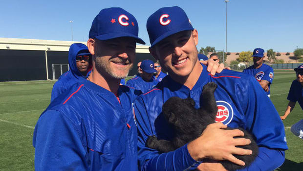 chicago_cubs_baby_bear_spring_training_photo_video.jpg