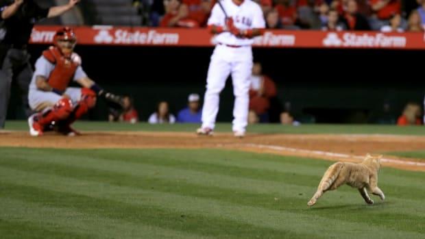 cardinals-angels-cat-on-field.jpg