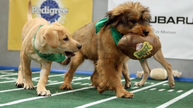 puppy-bowl-lead.jpg