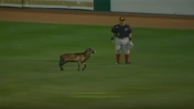 minor-league-baseball-sheep-delay-video.png