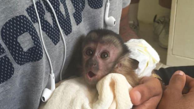 dez-bryant-pet-monkey.jpg