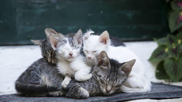 kitten-bowl-pictures.jpg