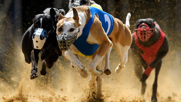 2016-0410-Gladiator-Ramanus-Chasing-Lanes-Firing-Aces-dog-racing.jpg