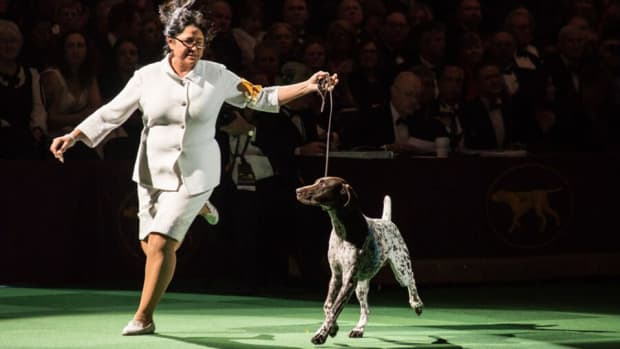 westminster-dog-show-lead.jpg