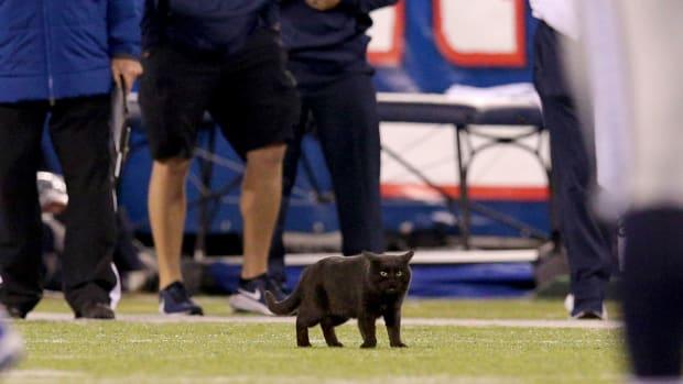 MetLife Stadium Cat