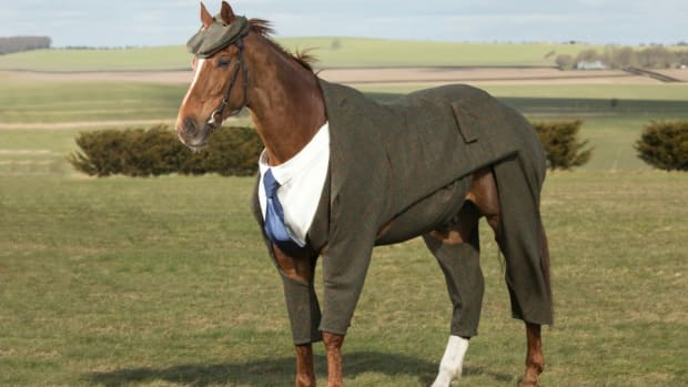 harris-tweed-three-piece-suit-horse-cheltenham-lead.jpg