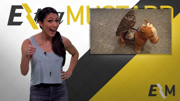 Mustard Minute: Kobe Bryant is great, but here's an owl riding a tiny toy horse IMG
