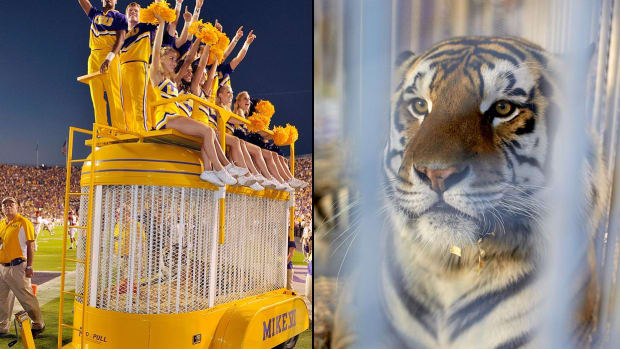 lsu-tigers-mascot-mike-the-tiger.jpg