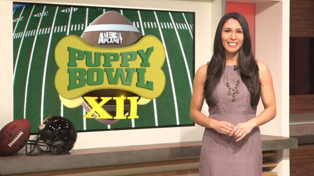 Extra Mustard's Puppy Bowl Power Rankings - IMAGE