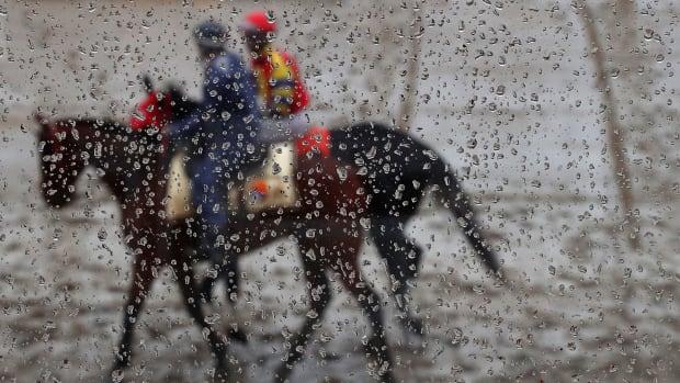 preakness-stakes-horses-die-undercard.jpg