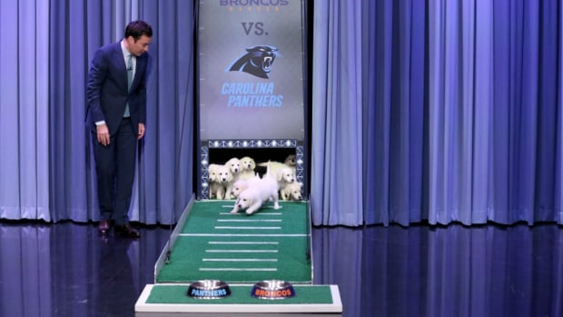 super-bowl-50-broncos-panthers-puppy-predictions-jimmy-fallon.jpg