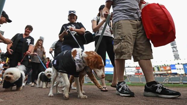 dog-us-cellular-field-world-record.jpg