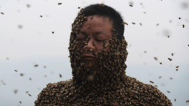 rockies-royals-spring-training-bees-swarm-photo.jpg