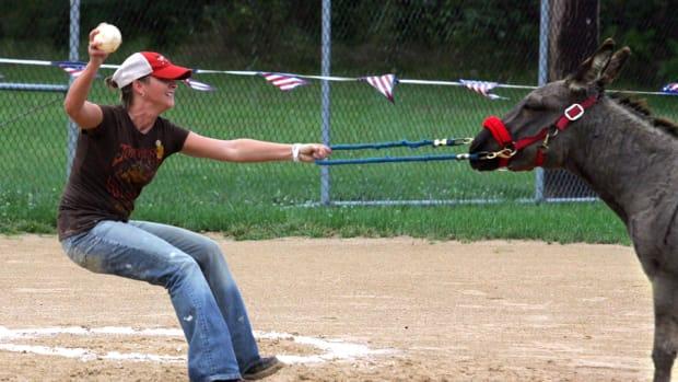 donkey-baseball.jpg