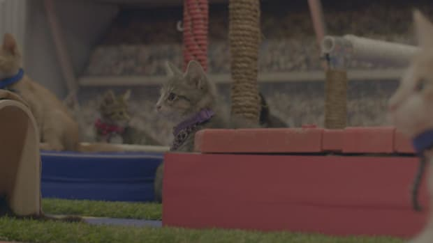 Mustard Minute: Watch kittens prepare for the Kitten Summer Games IMG