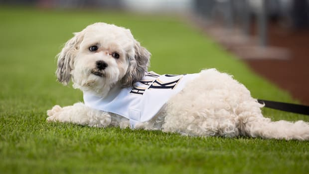 hank-the-dog-brewers-mascot-dead-or-alive-explainer.jpg