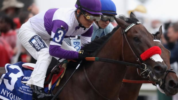 Nyquist out of Belmont Stakes with elevated white blood cell count - IMAGE