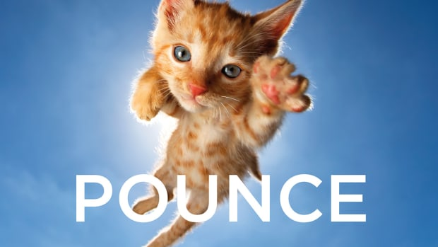 Pounce_Cover_low.jpg