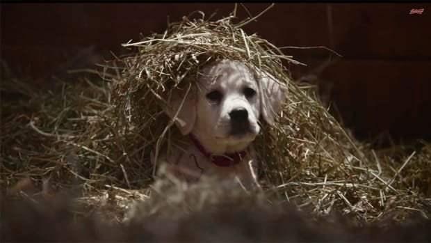 budweiser super bowl commercial dog clydesdales