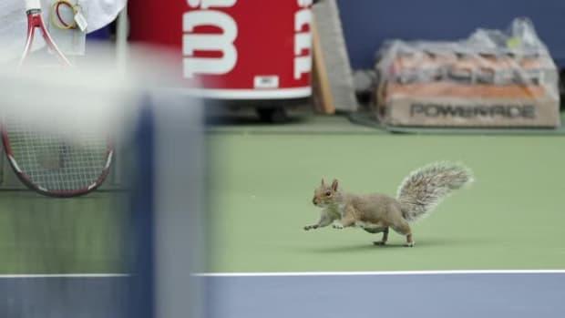 Watch: Squirrel dashes onto court, disrupts U.S. Open match--IMAGE