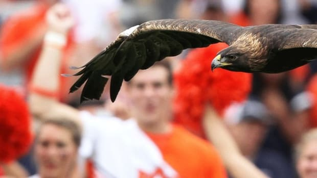 War Eagle! How Auburn's iconic birds are trained for their game-day flights