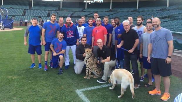 chicago-cubs-joe-maddon-cheetah-selfies.jpg