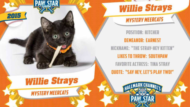 wille-strays.jpg