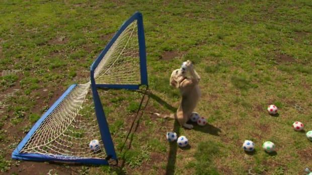 soccer-beagle-world-record.jpg