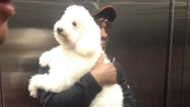 Willie Mays carrying a dog in an elevator at AT&T park
