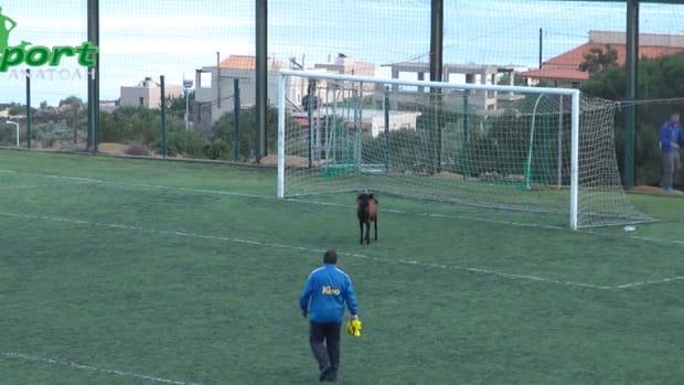video greek soccer match goat